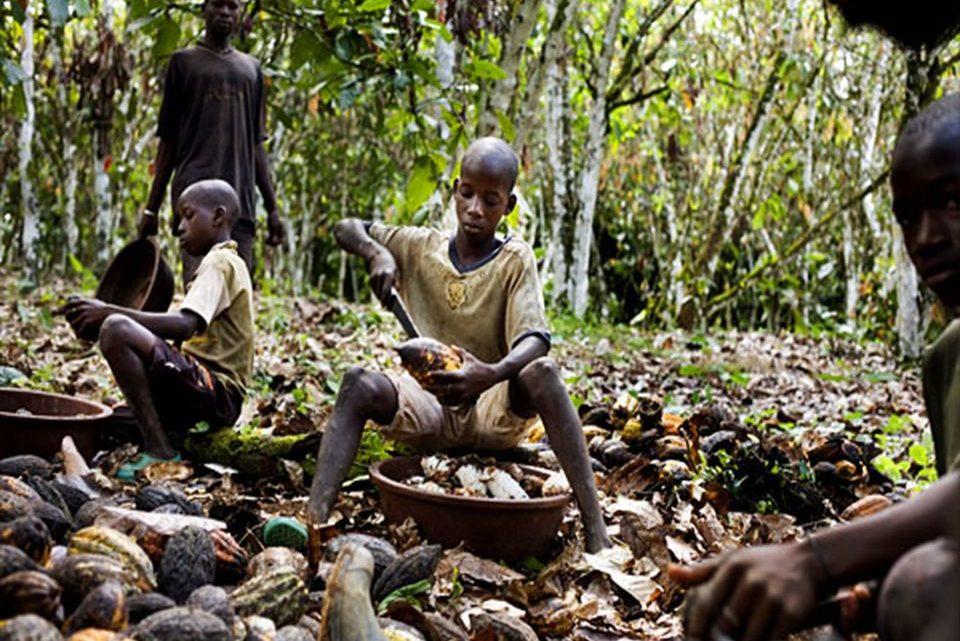 Côte d'Ivoire : Cacao culture le reportage de la chaîne Française ''Antenne 2'' porte un coup dur au cacao Ivoirien, celui-ci serait visé par un embargo Américain