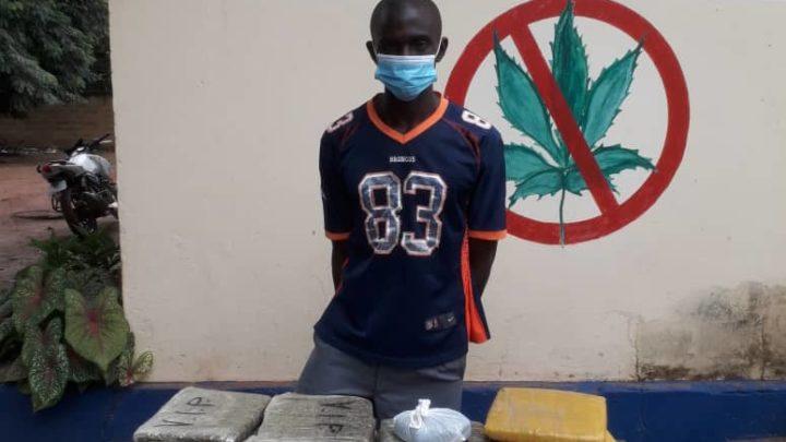Côte d'Ivoire (Drogues et stupéfiants):  Un commerçant pris avec 24 blocs de cannabis à Man
